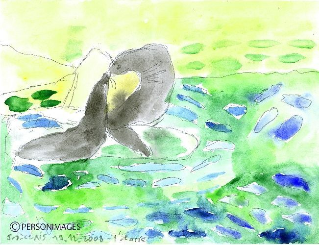 Jean-Dominique Clais - Otaries - H x L en cm : 22.5 x 25 - Aquarelle